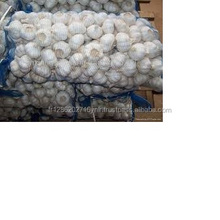 Natural Fresh White Garlic (10kg/Mesh Bag) For Sales