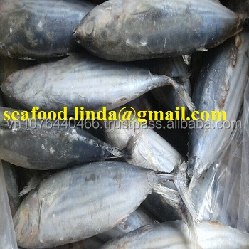 Frozen Skipjack Tuna Whole Round_good price_good quality