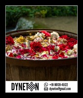 Rosa Damascena (Rose Essential Oil) - DYNETON
