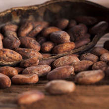 Cocoa Beans Dry Raw Natural