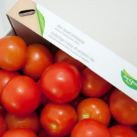 Best Quality Fresh Tomato From South