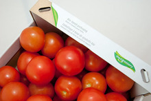 Best Quality Fresh Tomato from South Africa