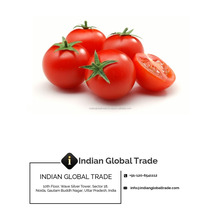 Pure & Natural Tomato Seed Oil - Indian Global Trade