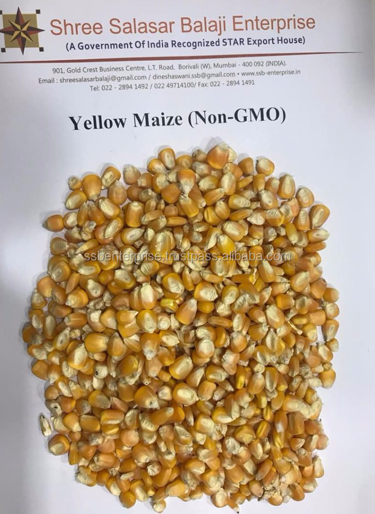 Yellow Maize for Poultry feed at a very competitive price