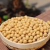 High Quality Protein Rich Bulk Soybean Seed for Animal Feed at Factory Price