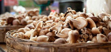 Dry oyster mushroom/Dry Shiitake Mushrooms /Dried Mushrooms