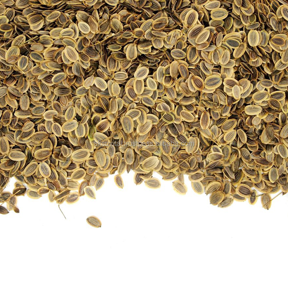 Dill Seed Oil Anethum Graveolens Bulk Sales of Herbal Essential Oils ...