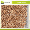 /product-detail/high-grade-raw-wheat-grain-for-export-sale-at-affordable-price-50038094596.html