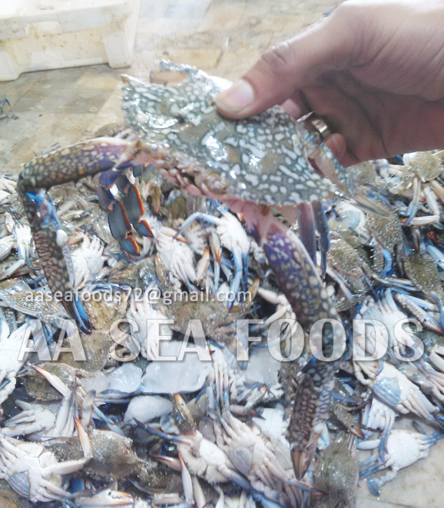 Well washed Cleaned Frozen blue swimming 3 spot crabs available