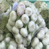 /product-detail/factory-supply-high-quality-fresh-natural-garlic-price-for-sale--50039235265.html