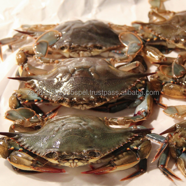 Quality Soft Shell Crab/Live Mud Crab/Frozen Soft shell Crab Box