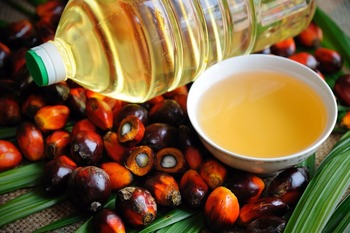 Top Quality Palm Oil