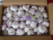 Fresh White Garlic supplier