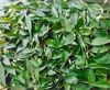 Curry Leaves /Curry Powder