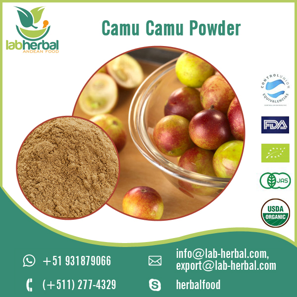 Natural and Organic Camu Camu Powder Available for Export Supply