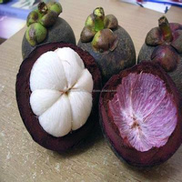 MANGOSTEEN - HIGH QUALITY - TOP SPECIAL PRICE