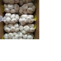 New Crop Fresh Garlic in Various sizes