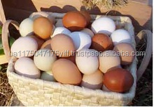 Fertile Hatching Chicken Eggs cheap price