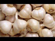 dehydrated Fresh garlic