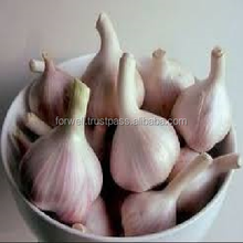Wholesale pure normal white fresh natural chinese garlic
