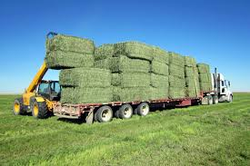 Quality Alfafa Hay For Animal feeding stuff Alfalfa / alfalfa hay / alfalfa hay for sale