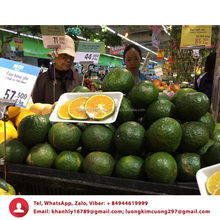 Cheap price orange fruit fresh Wholesale