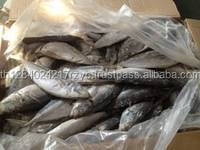 Price of Dried Sea Cucumber April Skin Horse Mackerel