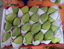 Fresh Mango - High quality and Best Price/ mango price/ FROZEN MANGO