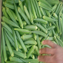 Wholesale Price Okra