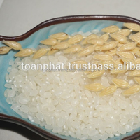 Best Quality Japonica Rice ( Whatsapp: +841687627504)