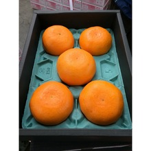 Good Taste Low Price Orange Fruit Fresh with Best Quality