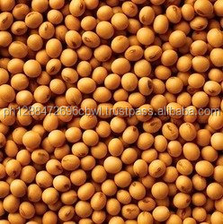 Soybeans Export/Quality Soybean , Soya Beans