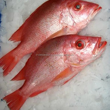Low Rate Frozen Red Snapper Whole Round/ High Quality Frozen Red Snapper fish