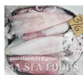 Frozen Seafood/item Loligo squids frozen for sale/ in bulk quantity