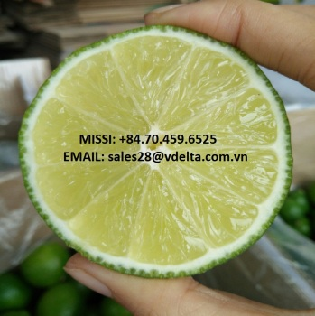LEMONS/FRESH SEEDLESS LIME/MS ANNY +84 326 261 558