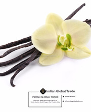Vanilla Essential Oil from India
