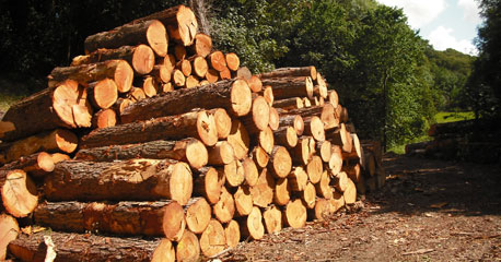 GOOD HIGH QUALITY AYOUS LOGS , Iroko african hard wood and timber