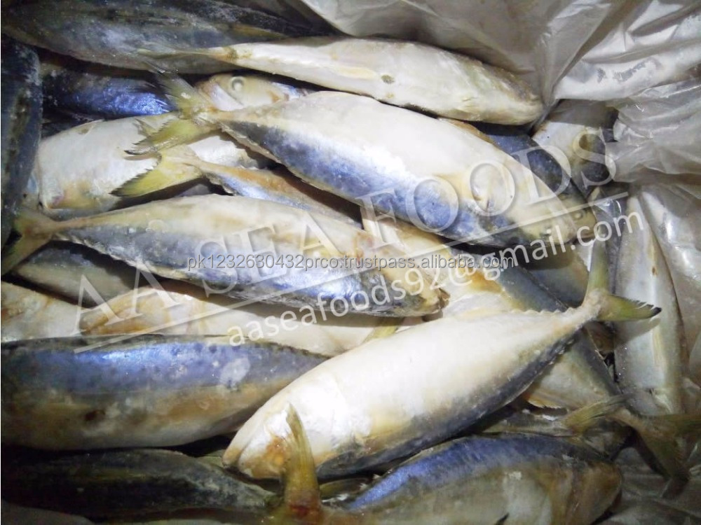 Whole fresh frozen Indian Mackerel fish/ for sale