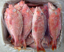 Red Snapper whole round