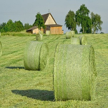 Alfalfa Hay,Timothy Hay and Bermuda Hay Now in Stock.