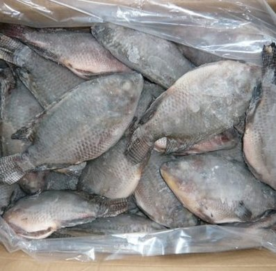 Tilapia Fish Best Fresh Frozen Seafood New Price