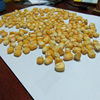 Best Quality Indian Animal feed yellow Corn