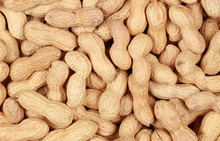 Peanut, Groundnuts, Peanut in Shell, White and Red Peanut
