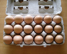 Low price Fresh white shell chicken table eggs