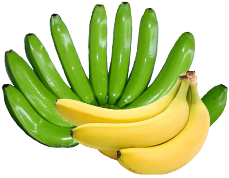 Top Quality Fresh Green Cavendish Bananas, Ecuadorian Green Cavendish Bananas, Filipino Green Cavendish Bananas