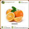 Fresh/ Natural/ Organic Good Quality Oranges in Bulk at Best Price