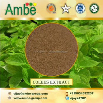 Coleus Extract Powder, Coleus Root extract, Froshohliin