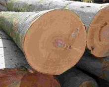 Natural Acacia Logs, Square available for sales