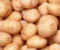 2018 new crop healthy holland yellow fresh potato with competitive wholesale price