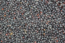 BLACK RAPE SEEDS, COLZA, Rape seeds (canola)